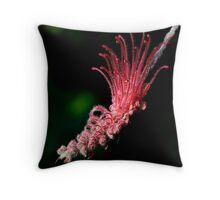 Grevillea thyrsoides Throw Pillow
