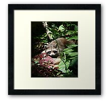 CATCHING A FEW RAYS Framed Print