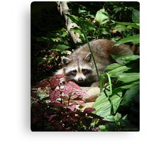 CATCHING A FEW RAYS Canvas Print