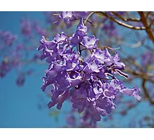 Flower Cluster Photographic Print
