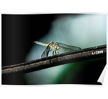 Dragonfly on a Wire Poster