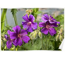 Purple Garden Flowers Poster