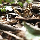 Speckled Wood by KMorral