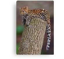 A Leopard's Tail Canvas Print