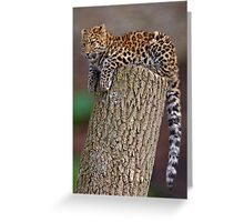 A Leopard's Tail Greeting Card