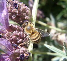 Busy Bee by Howard Lorenz