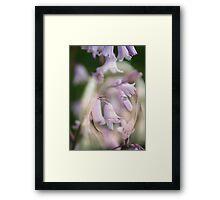 LIONESS AMONGST BLUEBELLS Framed Print
