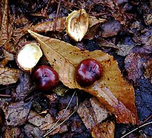 Fallen leaves and Conkers by gothgirl