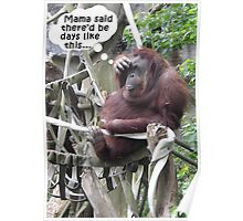 Funny Poster of an Orangutang With a Headache Poster