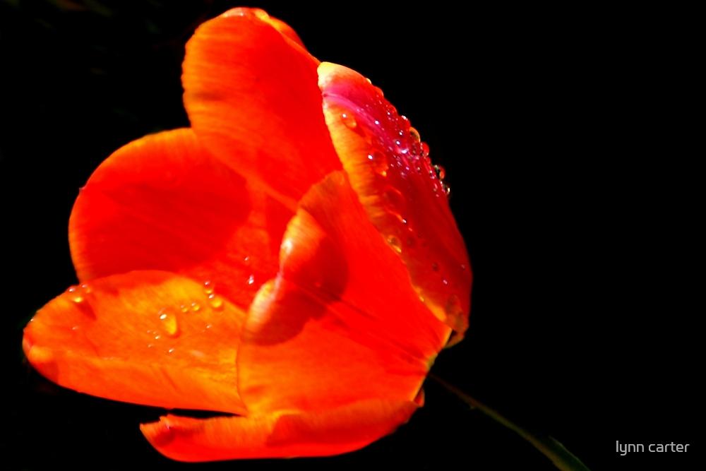 Orange Beauty by lynn carter