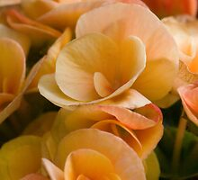 Flower power by Jessica Jones