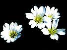 White On Black by lynn carter