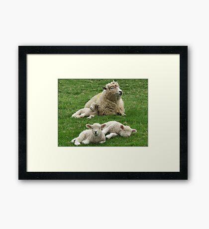 Family Life Framed Print