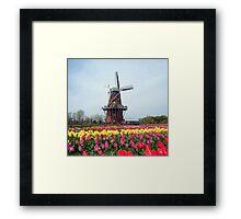 Holland Tulip Festival Framed Print