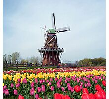 Holland Tulip Festival Photographic Print