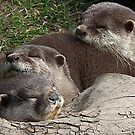 Part Of A Sweet  Family Of  Otters by lynn carter