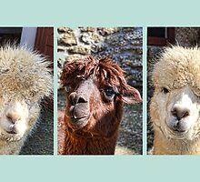The Three Amigos by lynn carter