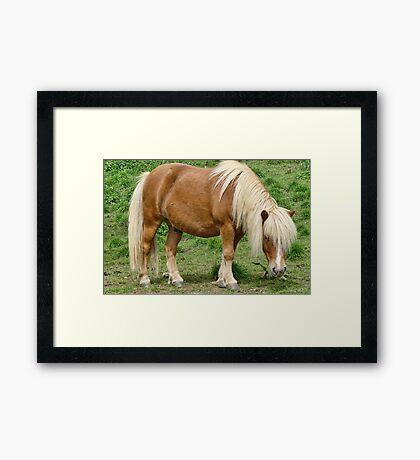 Small Horse Framed Print