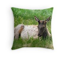 Lazing on a Sunny Afternoon Throw Pillow