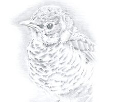 """Fledgling"" Silverpoint Drawing by LonettaAvelar"