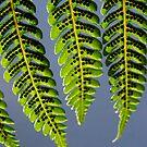 Green Translucence by Catherine Davis