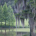 Baton Rouge Beauty by Steve Lindsay