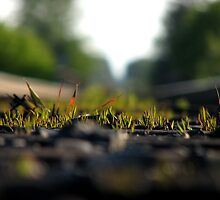 The Grassy Knoll by Alexbo