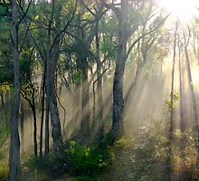Box-Ironbark Woodland, Yarra Valley, Victoria, Australia. by Ern Mainka
