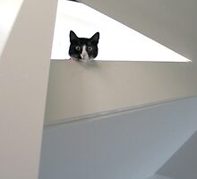 abstracat by Ray Pethick