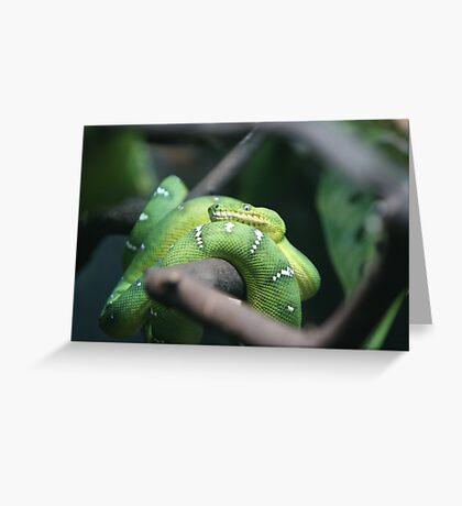 Sir Hiss-Emerald Tree Boa Greeting Card