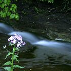 Flower By Stream by Raider6569