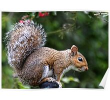 Squirrel On My Washing Line Poster