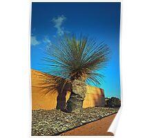 Mt Annan Grass Tree Poster