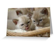 Very CATptivating sisters Greeting Card