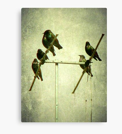Starlings Canvas Print