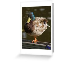 Sir Drake Greeting Card