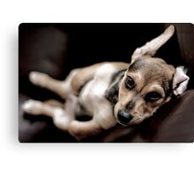 relaxed pup Canvas Print