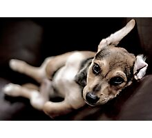 relaxed pup Photographic Print