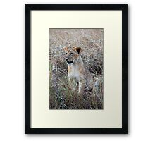 Young Lion in the Grass, Maasai Mara, Kenya Framed Print