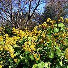 Yellowish Flowers to Warm the Soul of the Trees by Nira Dabush