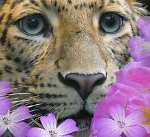 my leopard  looking a bit happier by brigdale