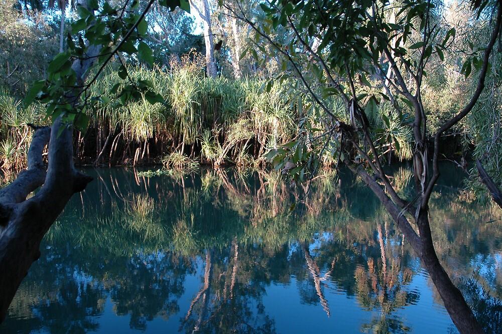 Wetlands near Darwin by Ian McKenzie