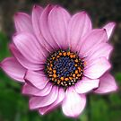 Sunlit Petals - So Pretty in Pink! by kathrynsgallery