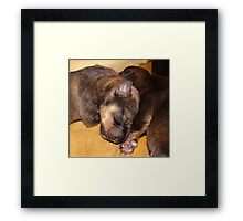 one day old Framed Print