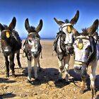 Donkeys HDR by Dfilmuk Photos