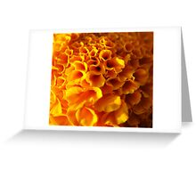 Macro Ruffles... Greeting Card
