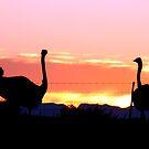 Fire Birds by Chris Coetzee