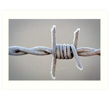 Barbed Wire Frost Art Print