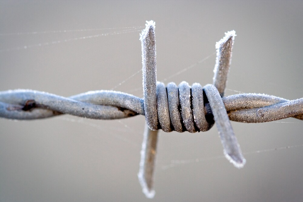 Barbed Wire Frost by Martin Pot