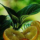 Refreshing lemon by snowbird
